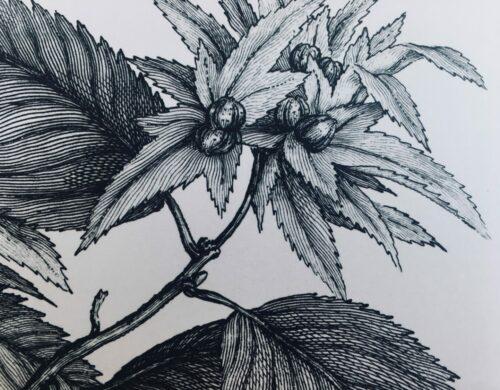 Mardi botanique