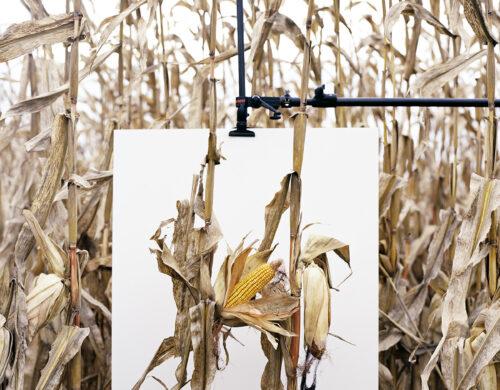 Monsanto® : une Enquête Photographique