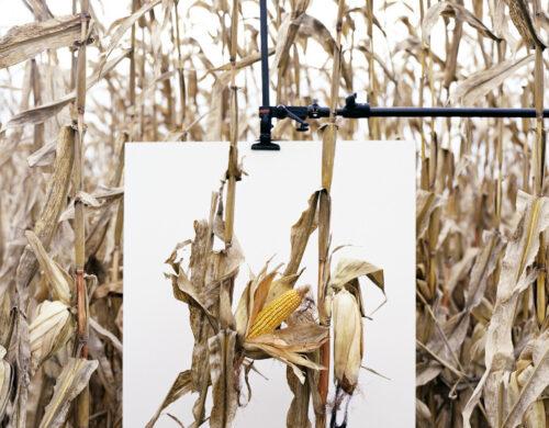 Monsanto®: une Enquête Photographique