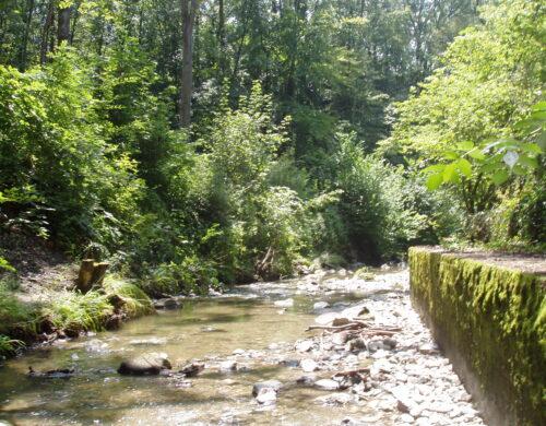 Eau, bois et jardins, quand la nature s'invite en ville